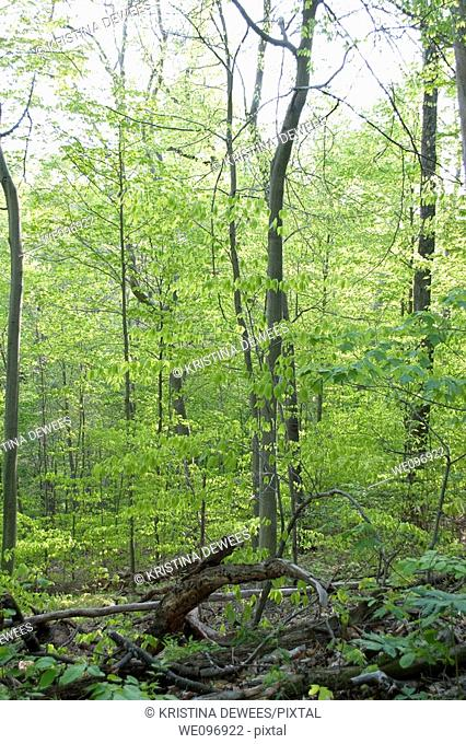 A woodland view in the Cuyahoga Valley