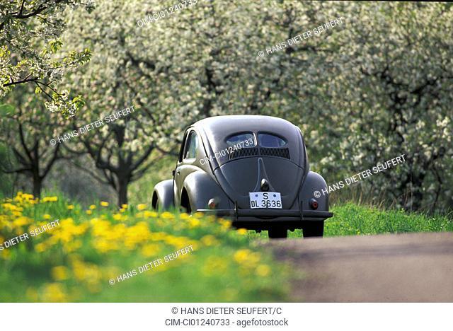 Car, VW, Volkswagen, beetle Typ 1, pretzel beetle, sedan, vintage car, model year 1949-1953, 1940s, fourties, 1950s, fifties, landscape, scenery, spring