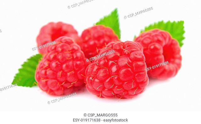 Sweet barries of raspberry