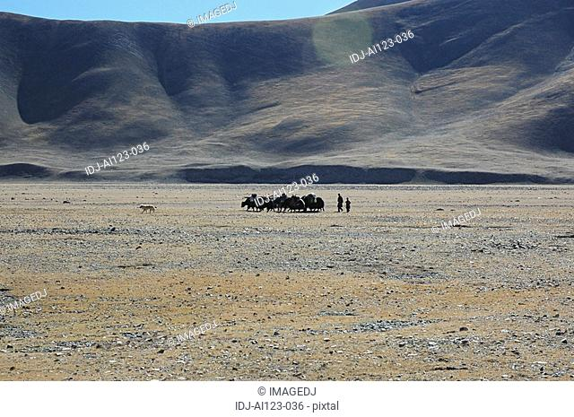 View of people and animals on a barren land