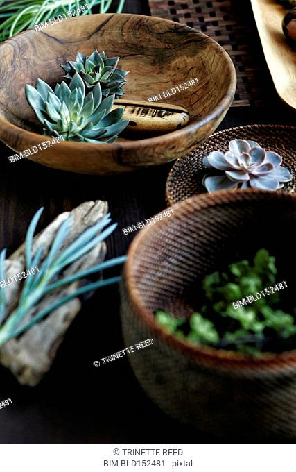 Succulent plants and wooden bowls and baskets