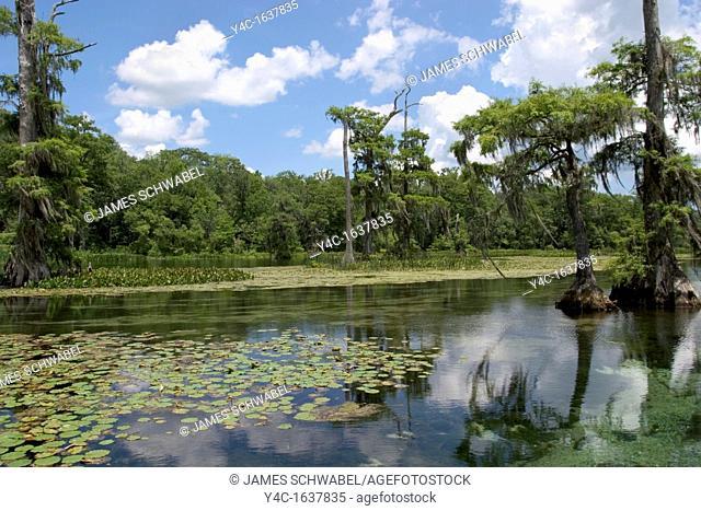 Wakulla River in Wakulla Springs State Park in the Panhandle region of Florida
