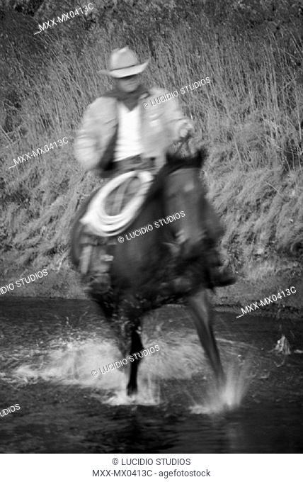 Cowboy riding through stream, Douglas Lake Ranch, British Columbia, Canada'