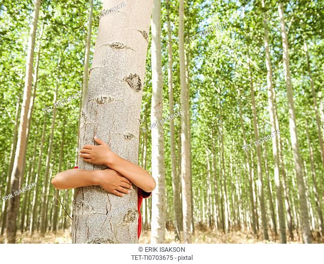 USA, Oregon, Boardman, Boy 8-9 hugging poplar tree in tree farm