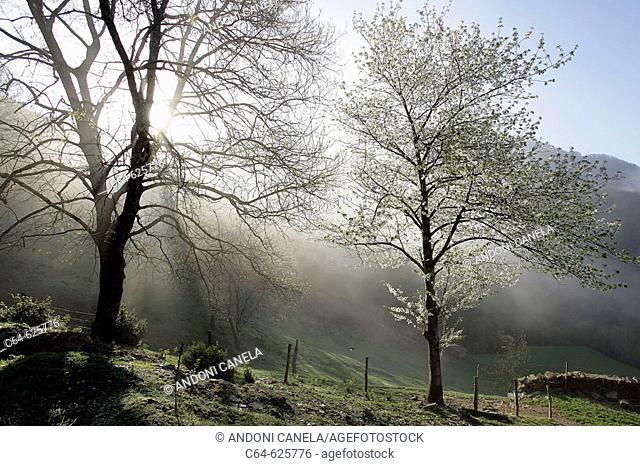 Montes de Oteizoain. País del Bidasoa. Bidasoa-Baztán. Navarra. Spain