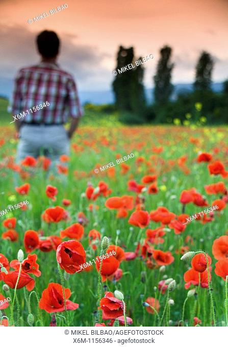 Man watching storm clouds on a poppy field Papaver rhoeas  Ayegui, Navarre, Spain, Europe