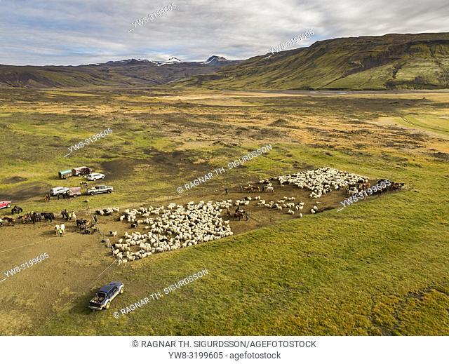 Sheep gathering, Central Highlands, Iceland