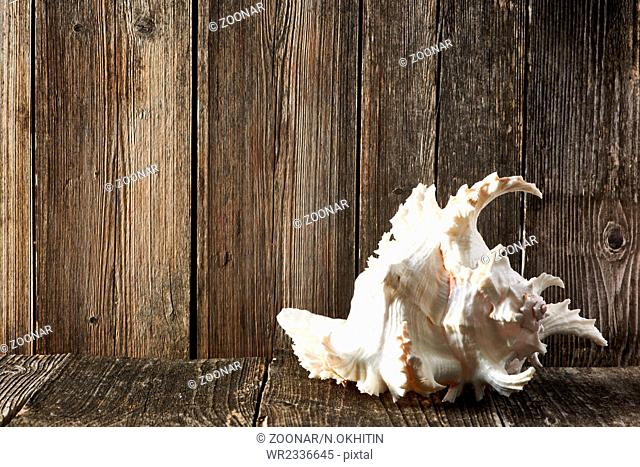Seashell on old wooden table