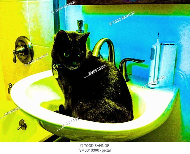 Dark gray tabby cat sitting in bathroom sink