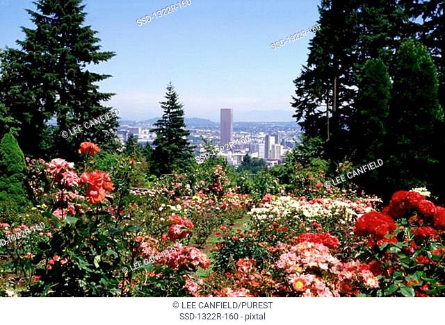 Flowering plants, Portland, Oregon, USA