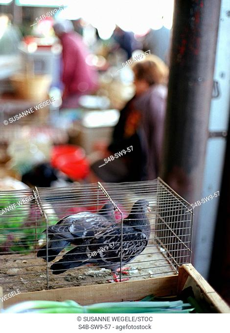 Pigeons in Cage - Market