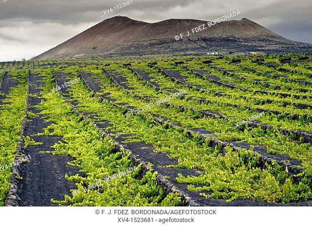 La Geria, winegrowing area  Lanzarote  Canary Islands, Spain