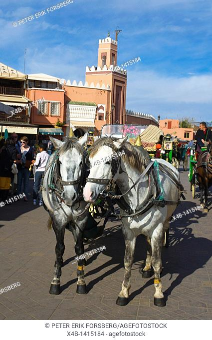 Horses at Djemaa el-Fna square Medina old town Marrakesh central Morocco Africa
