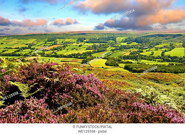 View of Danby Dale and Botton Village with heather flowering. North Yorks National Park, North Yorkshire, England
