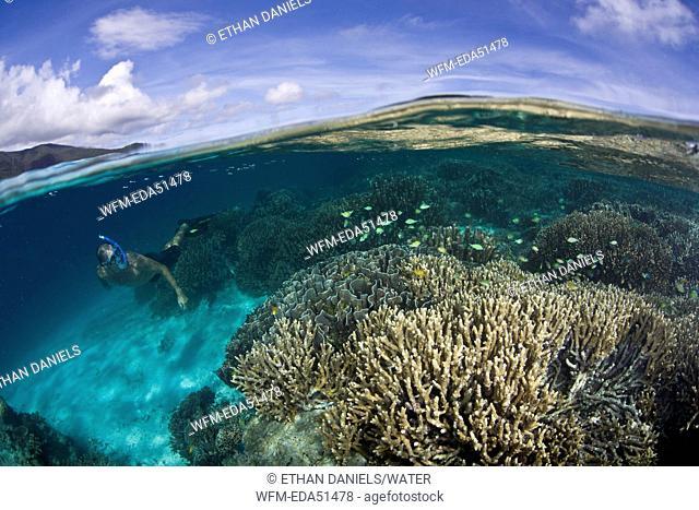 Snorkeling at Coral Reef, Raja Ampat, West Papua, Indonesia