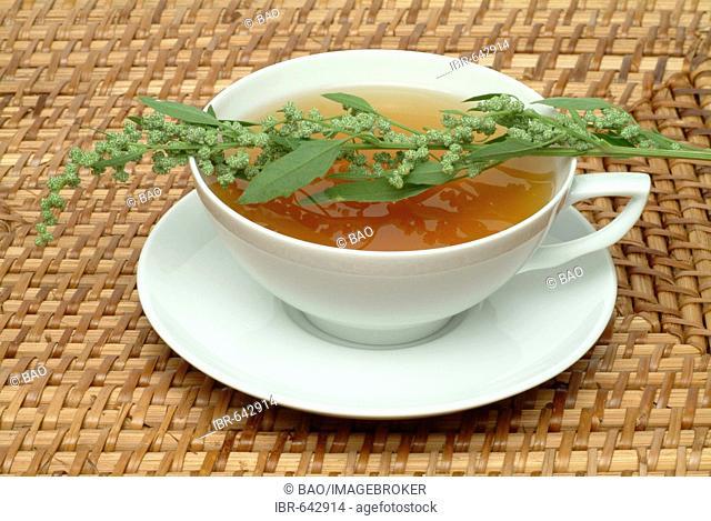 Mugwort or Common Wormwood (Artemisia vulgaris), herbal tea
