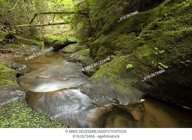 A creek flows over a series of stone steps in a forest