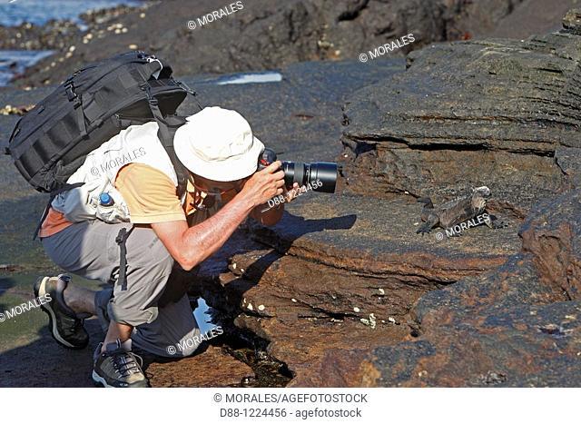 Marine Iguana Amblyrhynchus cristatus