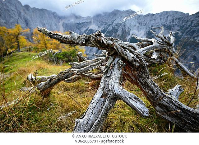 Slovenia. Julian Alp. dry tree