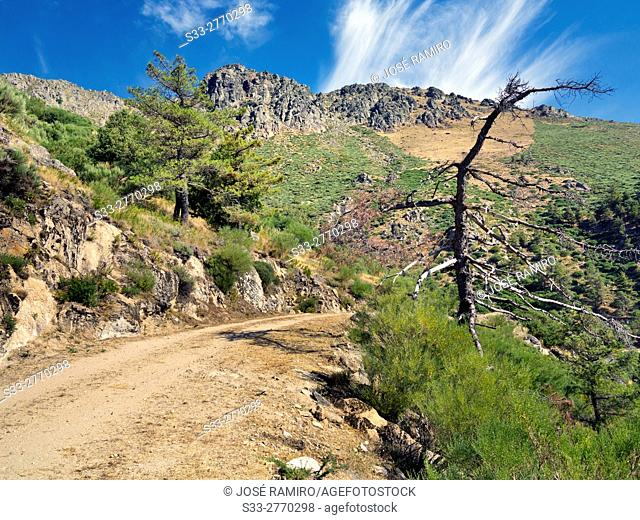 Hiorcajo road and Peluca cliff in the Sierra de Gredos. Mijares. Avila. Castilla Leon. Spain. Europe