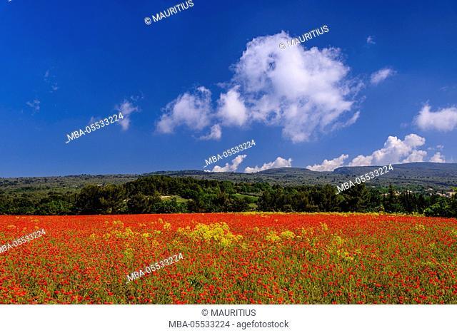 France, Provence, Vaucluse, Roussillon, poppy field against Monts de Vaucluse