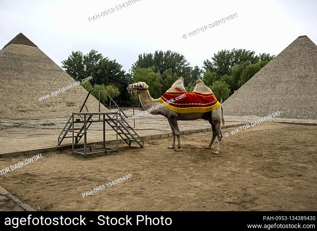 Camel waits for the tourists at World Park in Beijing, China on 26/07/2020 Due to epidemic situation there are no tourists in Chinese capital