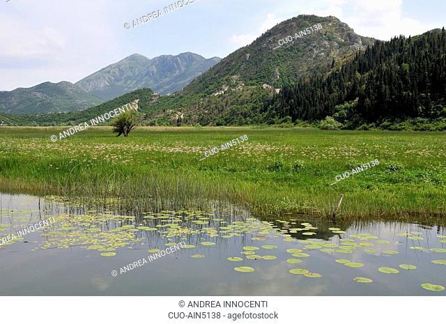 Montenegro - Skadarsko Jezero (Lago Scutari) - L'area palustre di Virpazar