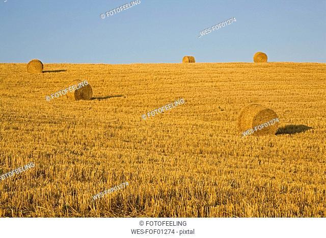Italy, Tuscany, Bales of straw on corn field