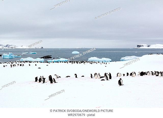 Antarctica, penguins in Antarctica