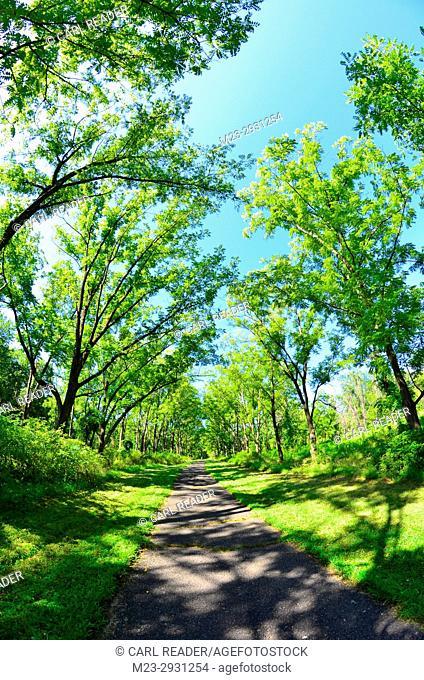 A fisheye view of a path, Pennsylvania, USA