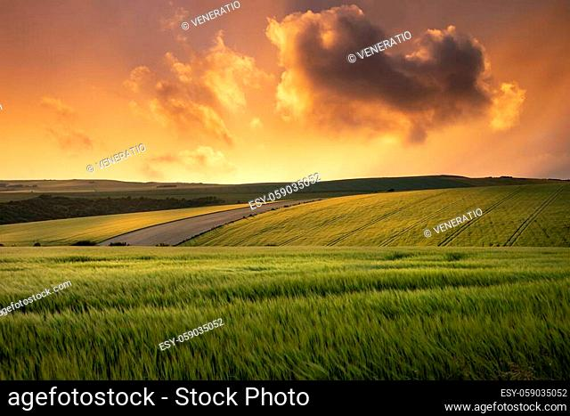 Beautiful lnadsape image of field of barley crop at sunset in English countryside