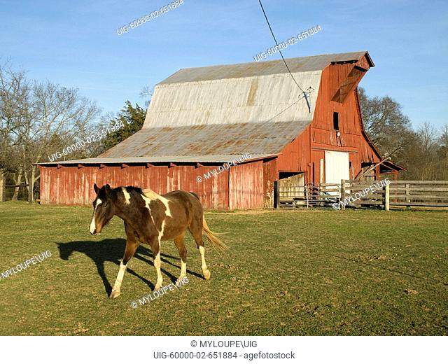 Red Barn & Horse