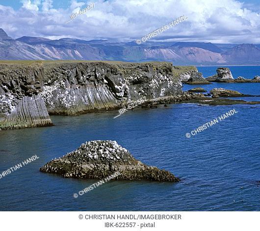 Cliffs formed by volcanic basalt columns, Arnarstapi, Snaefellsnes Peninsula, Iceland