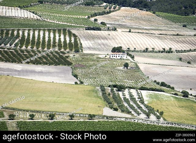 Vineyards in Moixent Valencia province Spain. Aerial view