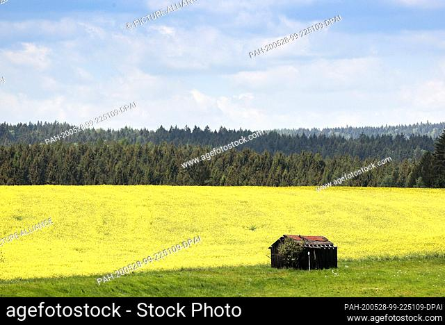 28 May 2020, Saxony, Bad Brambach: A haystack stands in a field. Photo: Jan Woitas/dpa-Zentralbild/ZB. - Bad Brambach/Saxony/Germany