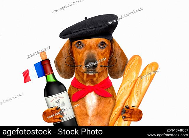dachshund sausage dog with beret hat, isolated on white background, with red wine and baguette and french hat and flag