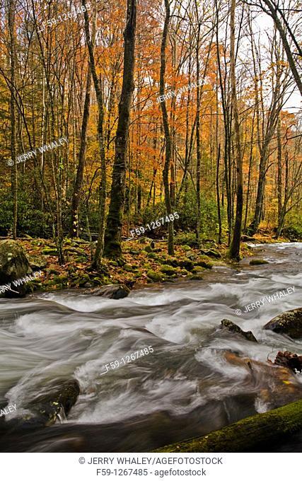 River, Oconaluftee area, Great Smoky Mtns National Park, NC
