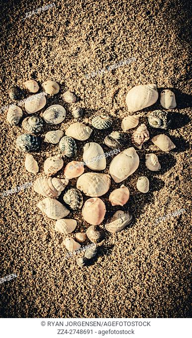 Love of the ocean themed still life with a high angle view on a heart shaped gathering of seashells on sand. Beach hearts