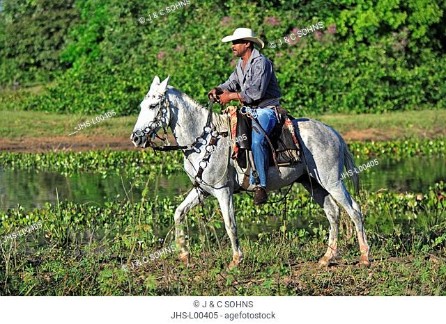 Pantanal Cowboy, Pantaneiro, Horse, Pantaneiro Horse, Pantanal, Brazil, riding