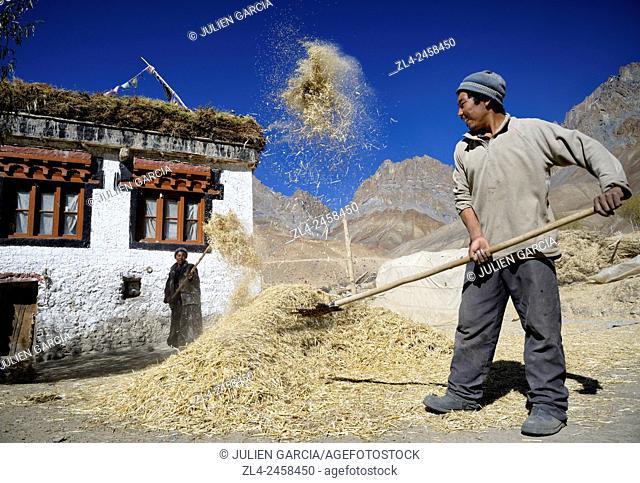 India, Jammu and Kashmir State, Himalaya, Ladakh, Zanskar, wind winnowing barley in Gongma village near Skyumpata