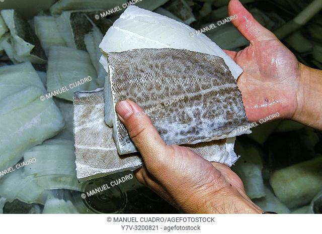 Hands showing cod during desalting process