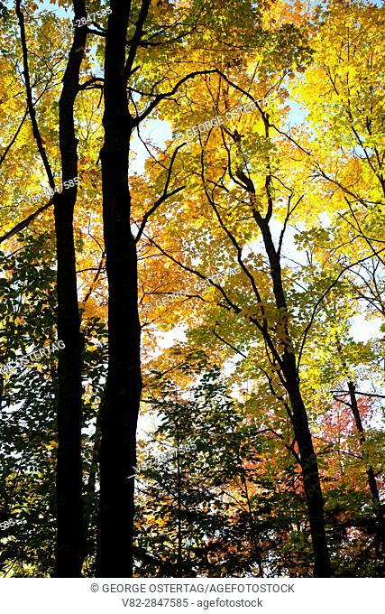 Forest along North Country National Scenic Trail, Chequamegon-Nicolet National Forest, Wisconsin
