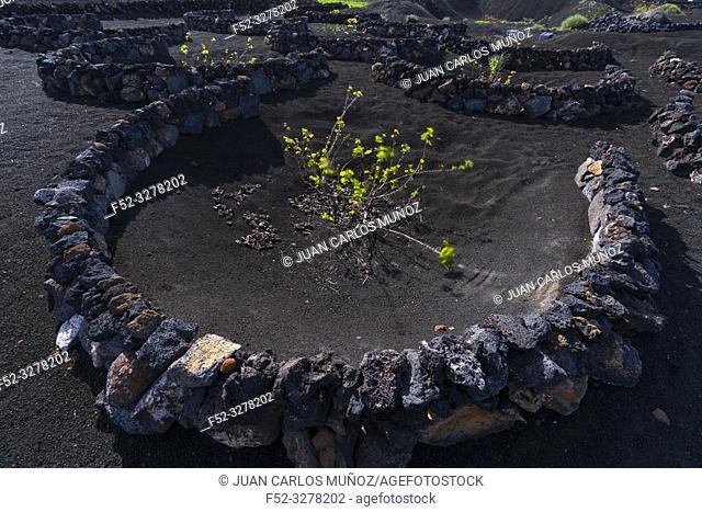 Vineyards, Rural landscape, Volcanic landscape, La Geria, Lanzarote Island, Unesco Biosphere Reserve, Canary Islands, Spain, Europe