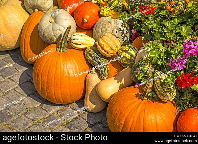 squash for decoration in a street in Germany