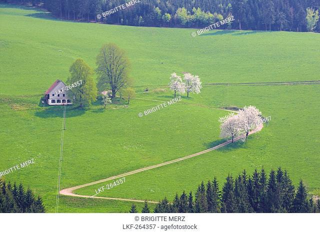 Spring day near St. Maergen, Black Forest, Baden-Wuerttemberg, Germany, Europe