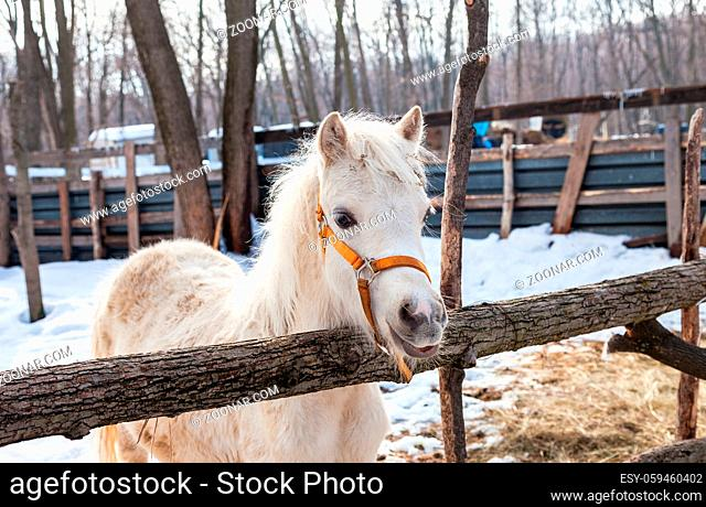 Head of a beautiful young horse at the farm