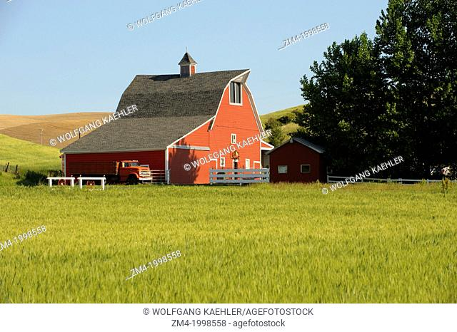 USA, WASHINGTON STATE, PALOUSE COUNTRY NEAR PULLMAN, RED BARN IN WHEAT FIELD, OLD TRUCK IN FRONT OF BARN