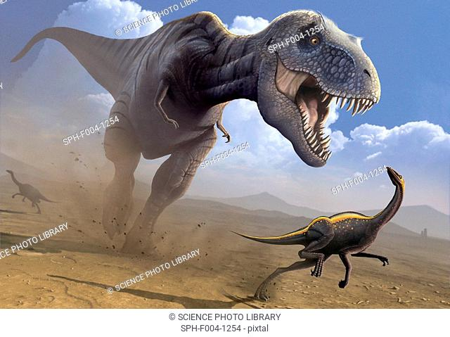 Computer artwork of a Tyrannosaurus rex dinosaur hunting an Ornithomimus dinosaur. T. rex was among the largest carnivorous dinosaurs