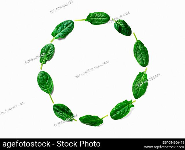 Pattern from baby spinach leaves in round circle frame isolated. Circle shape in fresh green spinach. Isolated on white with clipping path