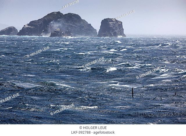 Albatros skims across stormy Drake Passage sea with rocky headlands, near Cape Horn, Cape Horn National Park, Magallanes y de la Antartica Chilena, Patagonia